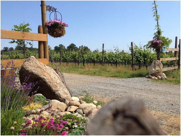 wine tours, vineyard tours, limo wine tours
